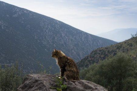 Chat en Grèce