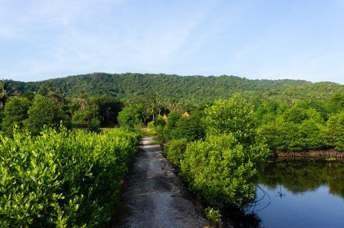 Mangrove, Karimunjawa, Indonésie