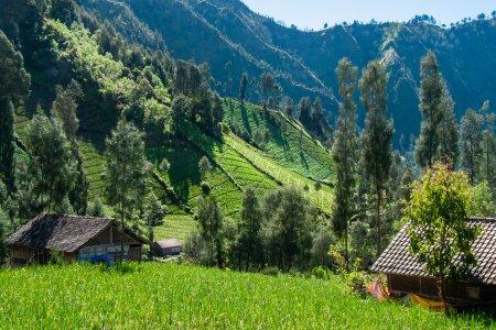 Paysages autour du Mont Bromo, Indonésie