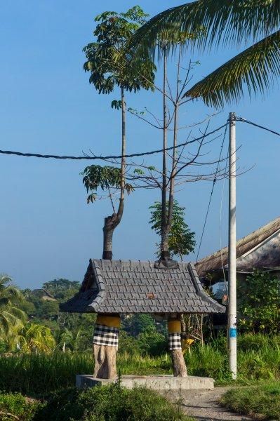 Temple autour d'un arbre à Bali