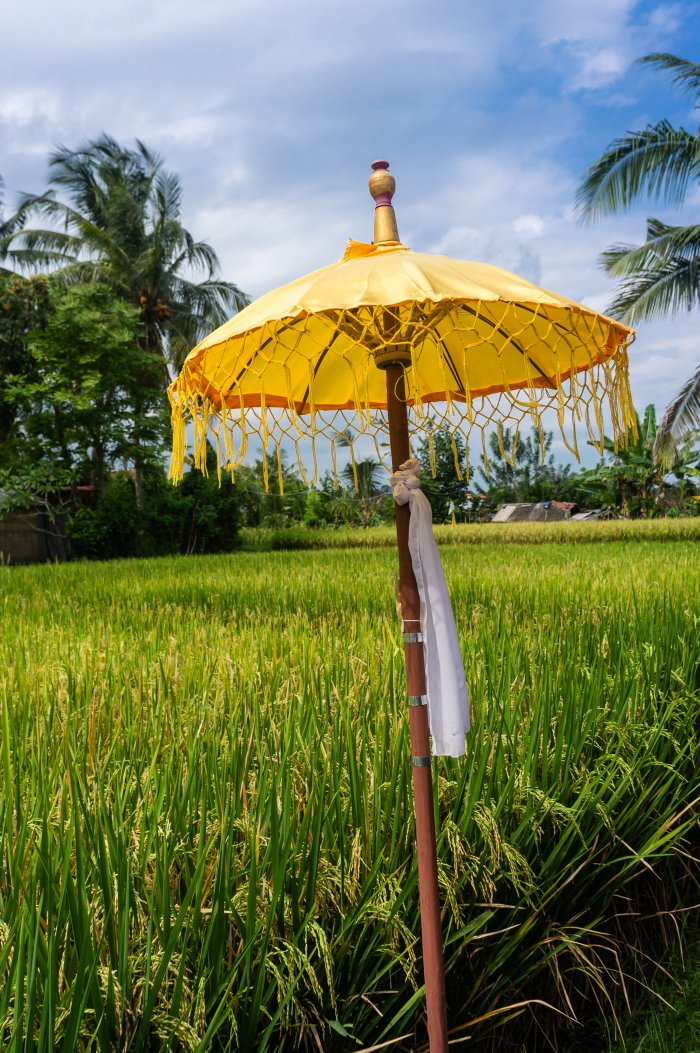 Parapluie et rizières à Ubud, Bali