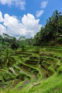 Rizières de Tegalalang, Bali