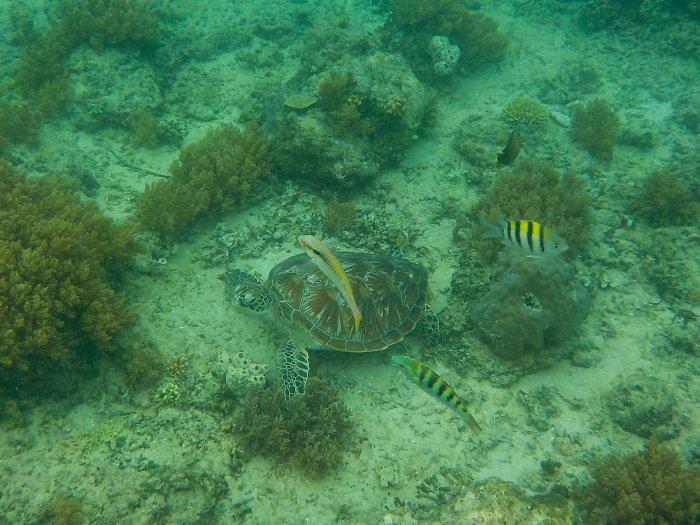 Tortue de mer à Gili Air