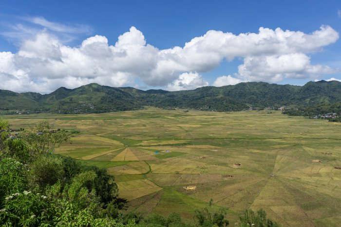 Spider rice fields, Ruteng