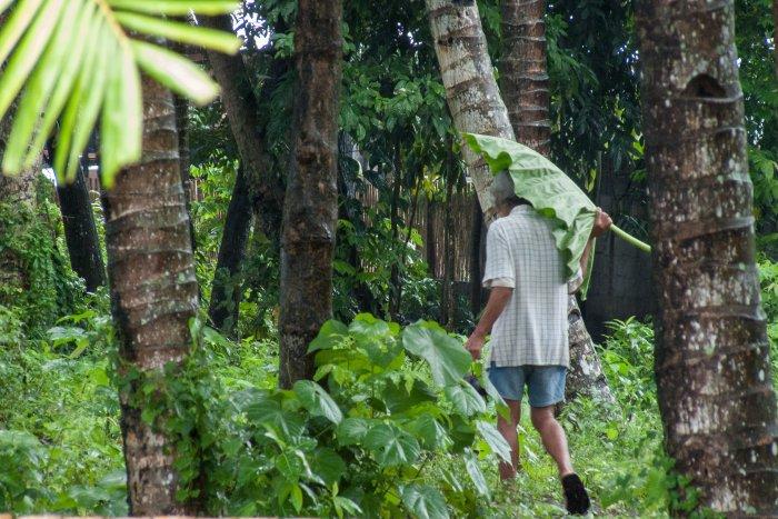 Parapluie naturel