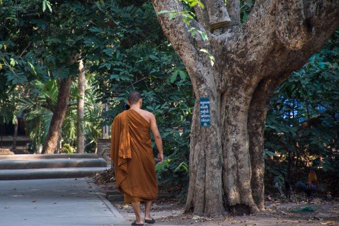 Moine au Wat Umong, Chiang Mai, Thaïlande