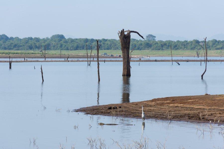 Crocodiles à Udawalawe