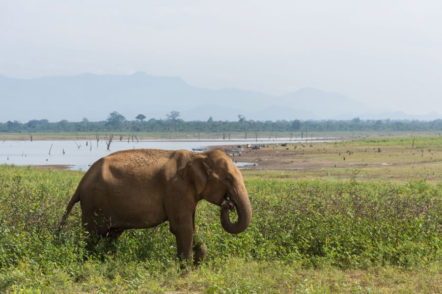 Parc national d'Udawalawe, Sri Lanka