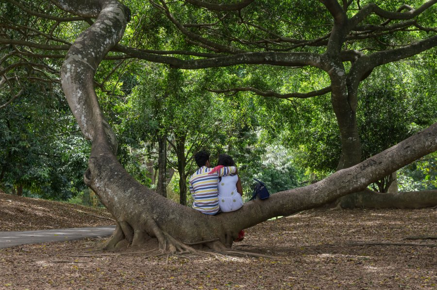 Jardin botanique de Kandy, Sri Lanka