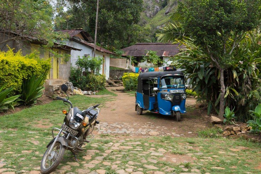 Amba, plantation de thé, Sri Lanka