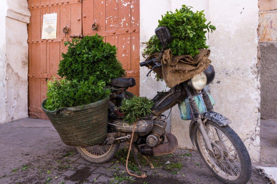Vendeur de menthe au Maroc