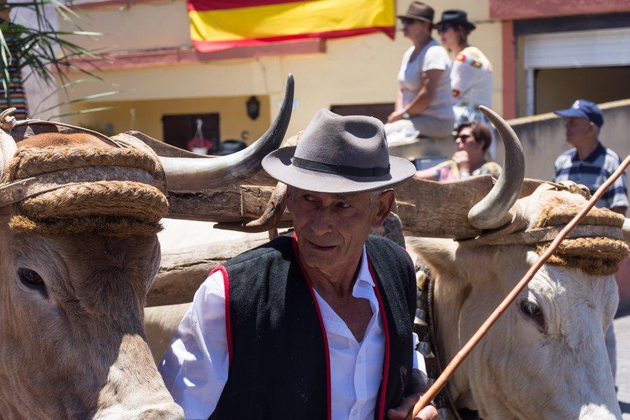 Romería de Las Mercedes, Tenerife