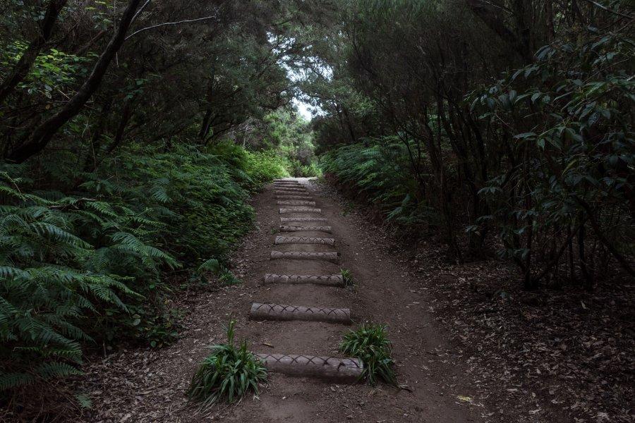 Randonnée dans la forêt de l'Anaga, Tenerife