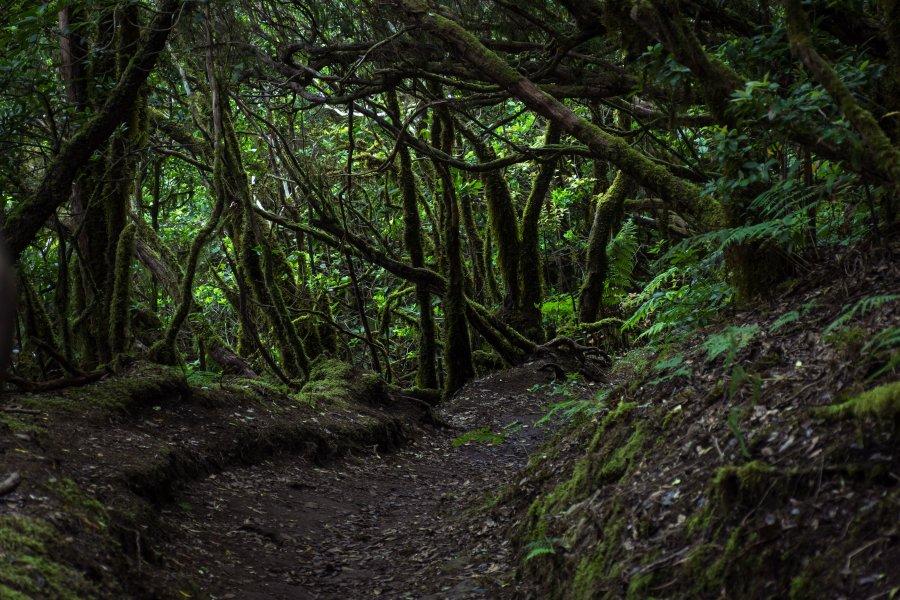 Bosque encantado, Anaga, Tenerife