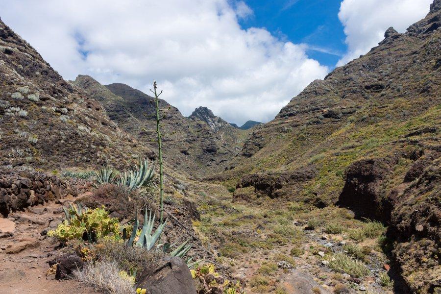 Randonnée de Cruz del Carmen à Punta del Hidalgo, Anaga