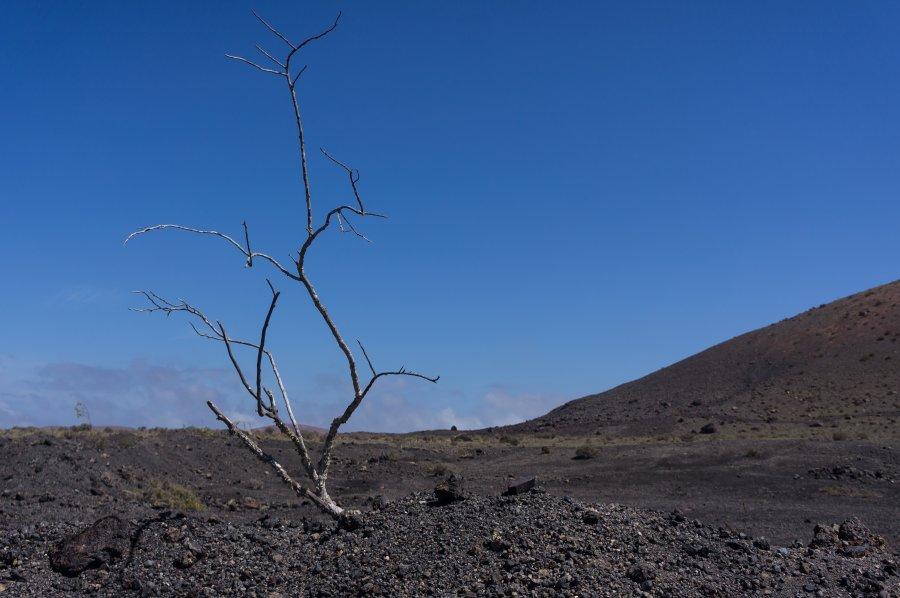 Terre volcanique à Lanzarote