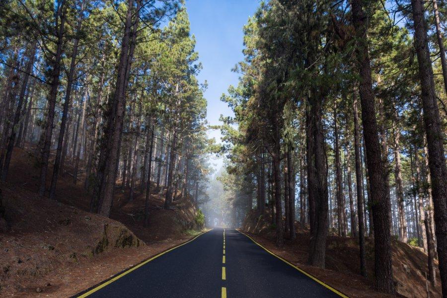 Traversée d'une forêt de pins, Tenerife
