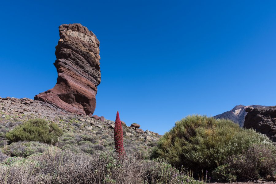 Roques de Garcia et vipérine, Teide, Tenerife