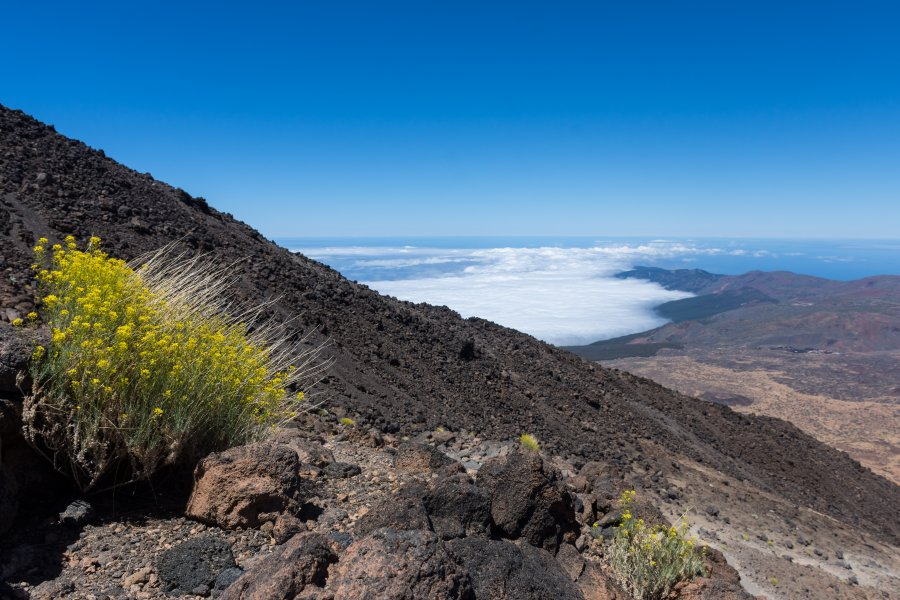 Ascension du Teide par la Montaña blanca, Tenerife