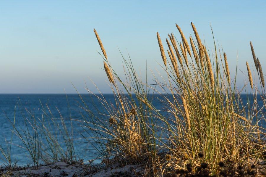 Plantes en bord de mer