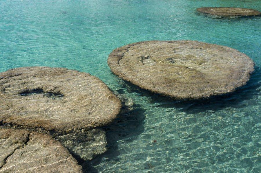 Stromatholites au Mexique