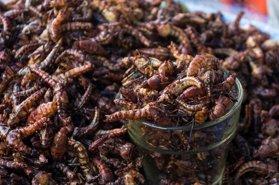 Chapulines, insectes mexicains