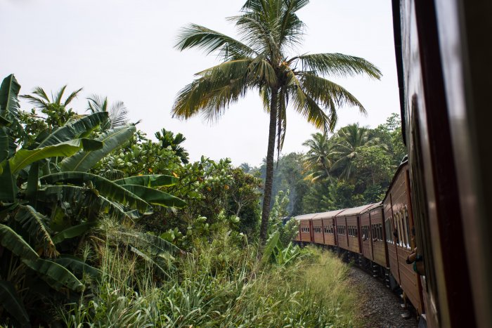 Train parmi les cocotiers au Sri Lanka