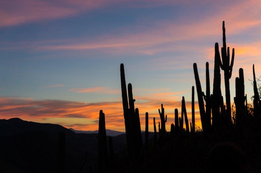 Cactus au coucher du soleil