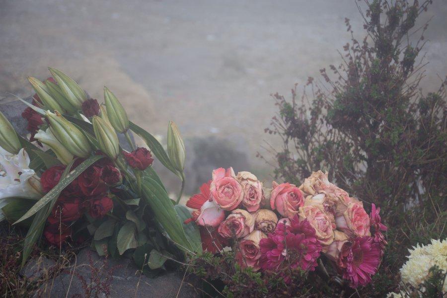 Roses sous la pluie