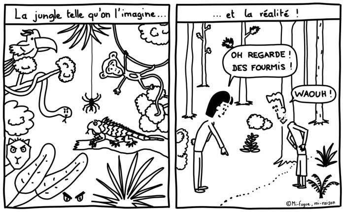 Dessin du lundi : la jungle telle qu'on l'imagine vs la réalité...