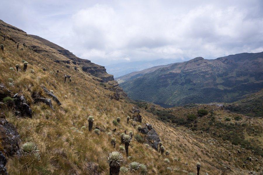 Randonnée dans le Paramo de Oceta, Colombie