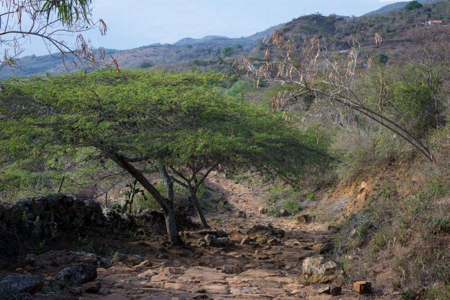 Chemin royal entre Barichara et Guane