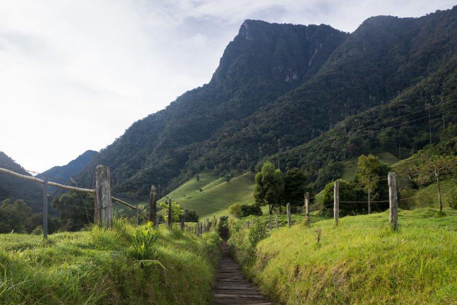Randonnée dans la vallée de Cocora, Salento, Colombie