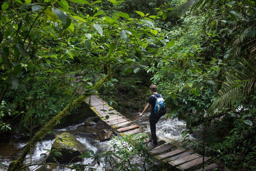 Pont suspendu dans la vallée de Cocora, Colombie