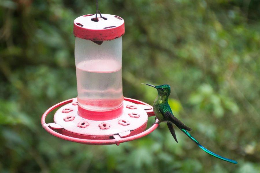 Colibri dans la vallée de Cocora, Salento, Colombie