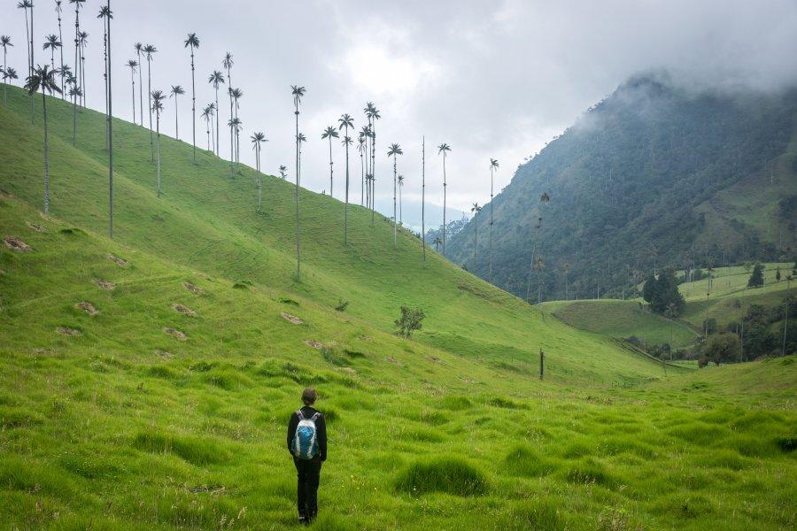 Randonnée dans la vallée de Cocora, Salento