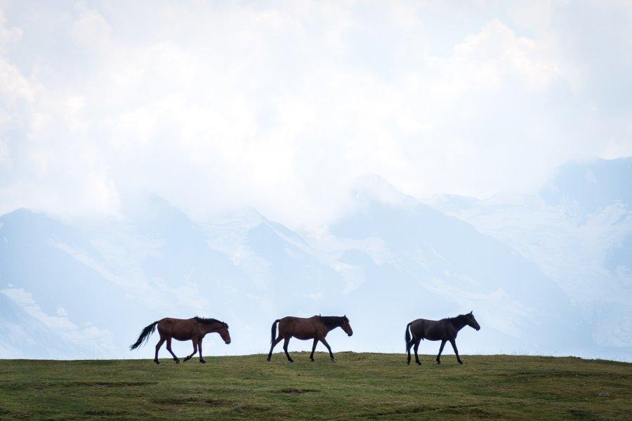 Montagnes de Svanétie, Mestia, Géorgie