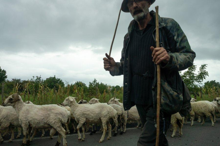 Berger et ses moutons en Géorgie