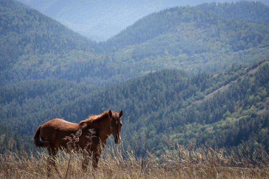 Cheval dans le parc national de Borjomi, Géorgie