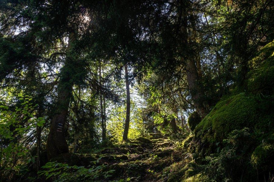 Forêt dans le parc de Borjomi, Géorgie