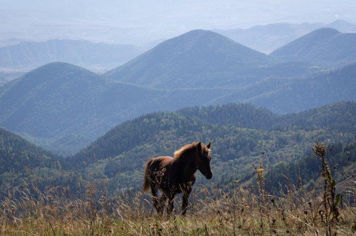 Poulain dans la montagne, Borjomi-Kharagauli