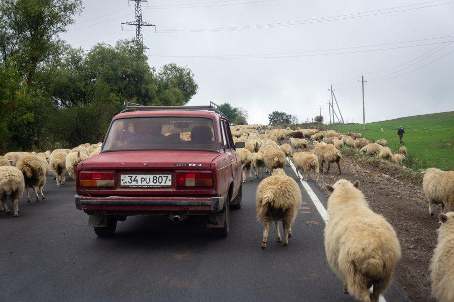 Lada au milieu des moutons en Arménie