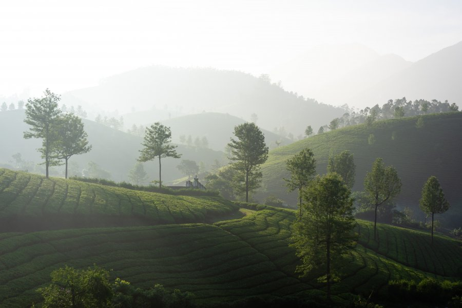 Lever de soleil à Munnar, Inde