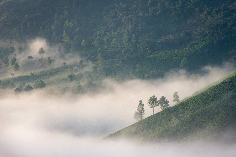 Brume matinale dans les montagnes de Munnar, Kerala, Inde