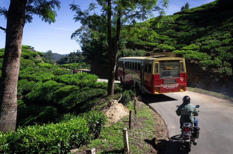 Bus dans les plantations de thé de Munnar, Inde