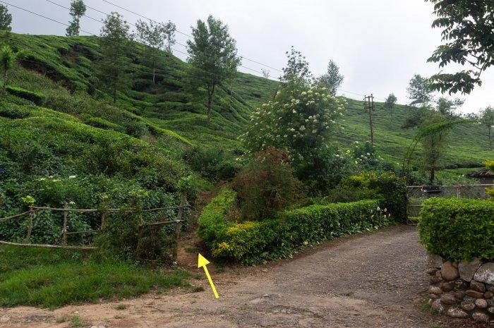 Chemin qui s'enfonce dans les plantations de thé depuis Munnar
