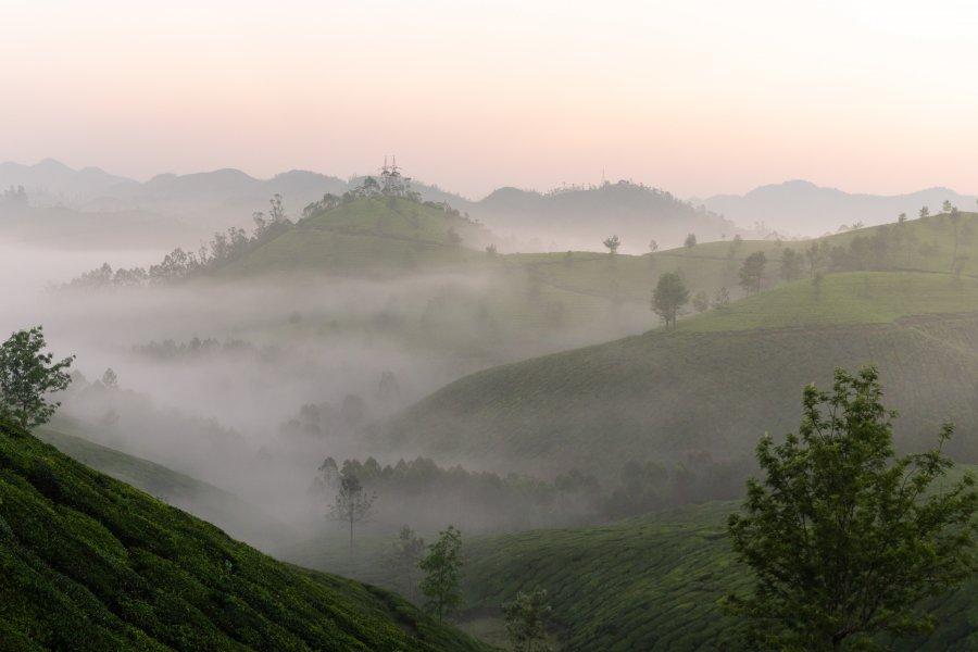 Lever de soleil et brume à Munnar, Kerala, Inde du sud