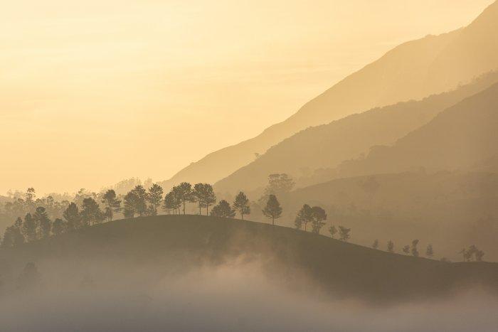 Lever de soleil sur les collines de Munnar, Kerala, Inde du sud