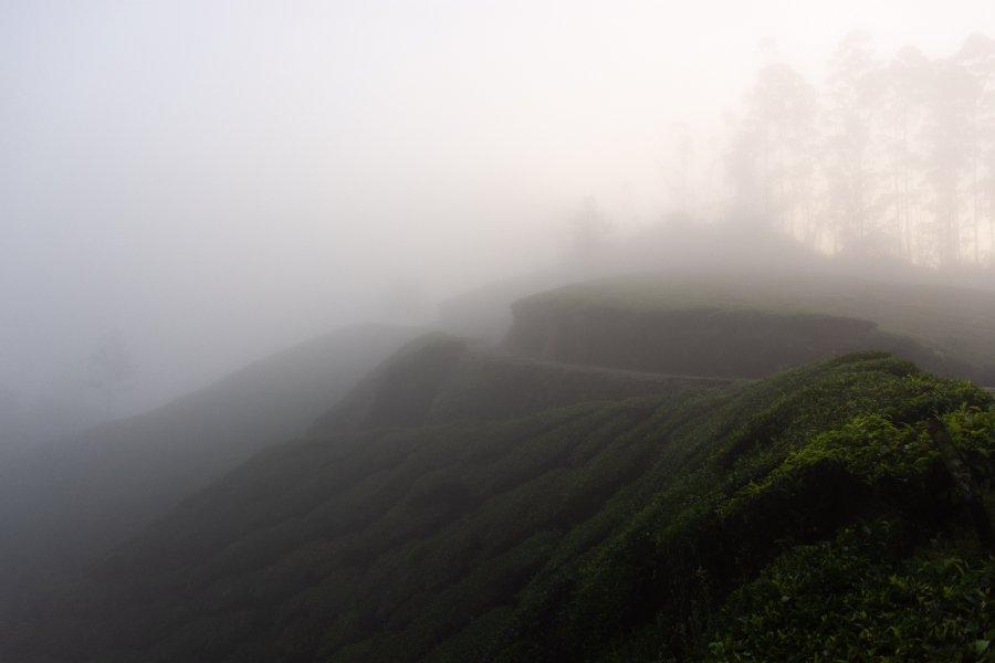 Randonnée au petit matin dans les plantations de thé de Munnar