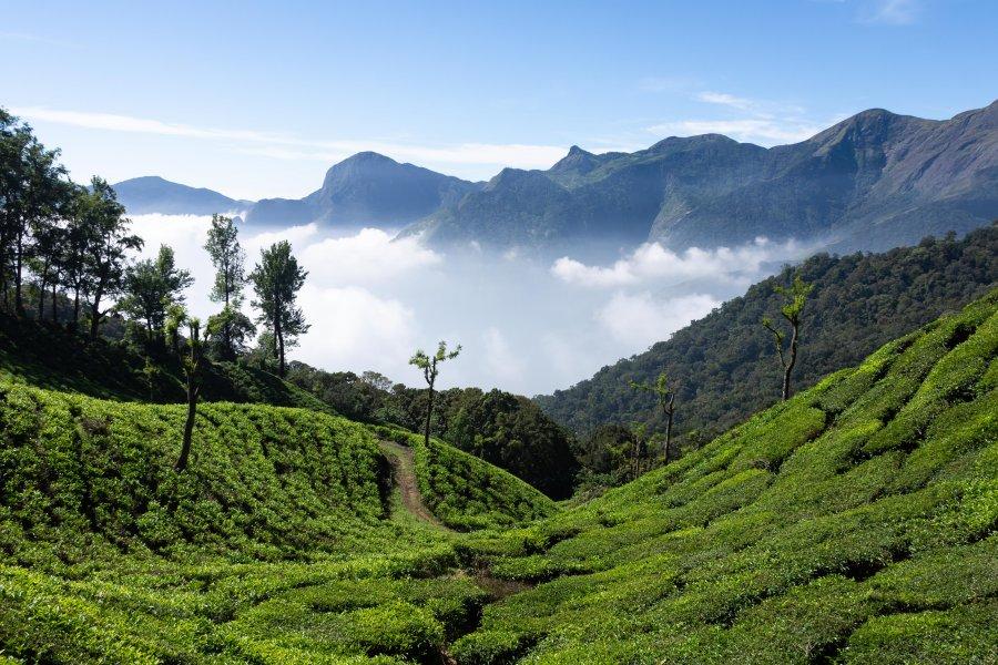 Top station : thé et montagne à Munnar, Inde